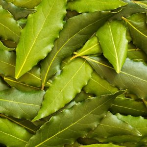 Bay Leaf oil | Essential Oils and Resinoids
