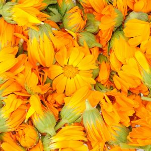 Calendula oil Infused | Vegetable Oils and Infusions
