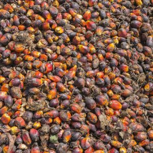 Palm Oil Refined Sustainable | Vegetable Oils | Equinox Aromas