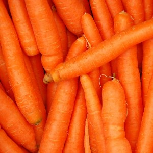 Carrot Tissue oil | Vegetable Oils and Infusions