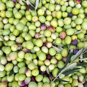 Olive Pomace Oil | Infusions and Vegetable Oils | Equinox Aromas