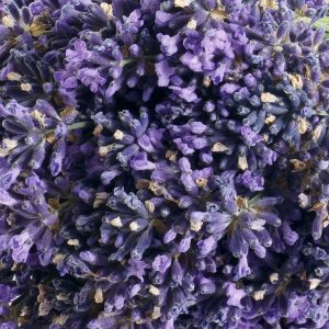 Lavender Oil Croatia | Essential and Aromatherapy Oils | Equinox Aromas