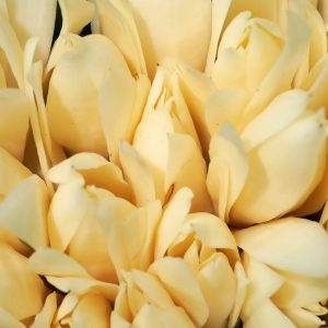 Magnolia Flower Oil China | Essential Oil Suppliers Online | Equinox Aromas