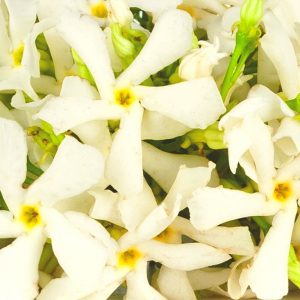 Neroli Oil Tunisian | Precious Oils and Absolutes | Equinox Aromas