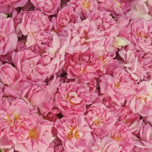 Rose Otto Turkish | Perfumery and Flavour Chemicals | Equinox Aromas