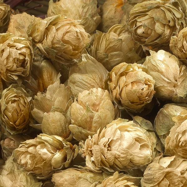 Hop Oil English | Online Supplier of Essential Oils | Equinox Aromas