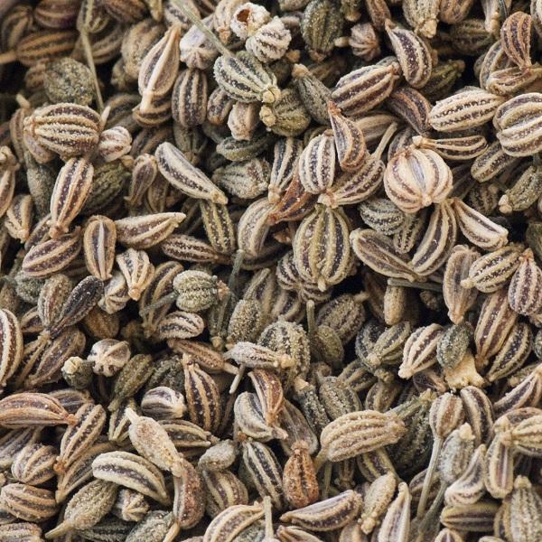 Lovage Seed Oil East Europe   Perfume Ingredients & Natural Oils   Equinox Aromas