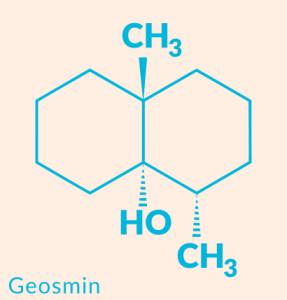 geosmin1