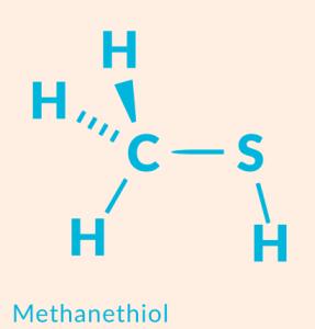 methanethiol1