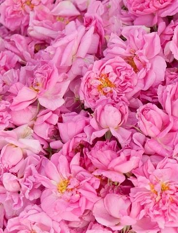 Rose Ott Bulgaria Turkish | Essential Oils and Resinoids | Equinox Aromas