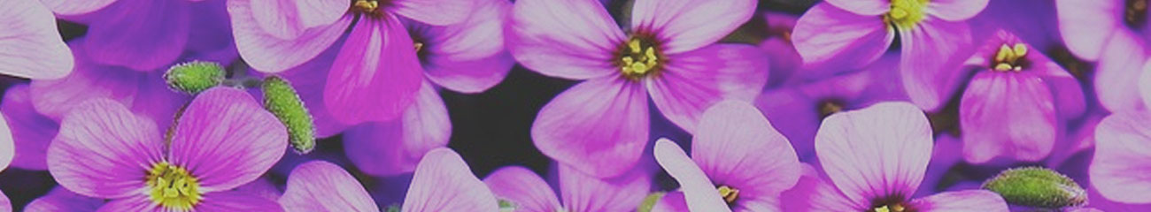 Purple Flowers | Cosmetic Ingredients | Equinox Aromas