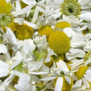 Chamomile oil Blue Egypt | Essential Oils and Resinoids