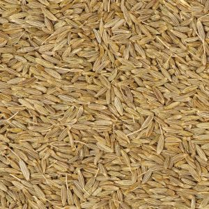 Cumin Seed oil Egypt   Essential Oils and Resinoids