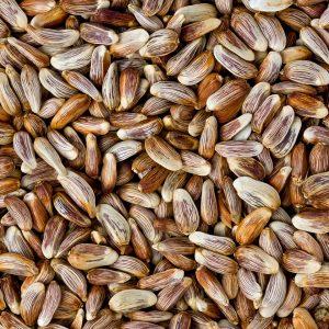 Safflower Oil | Vegetable Oil Online Supplier | Equinox Aromas