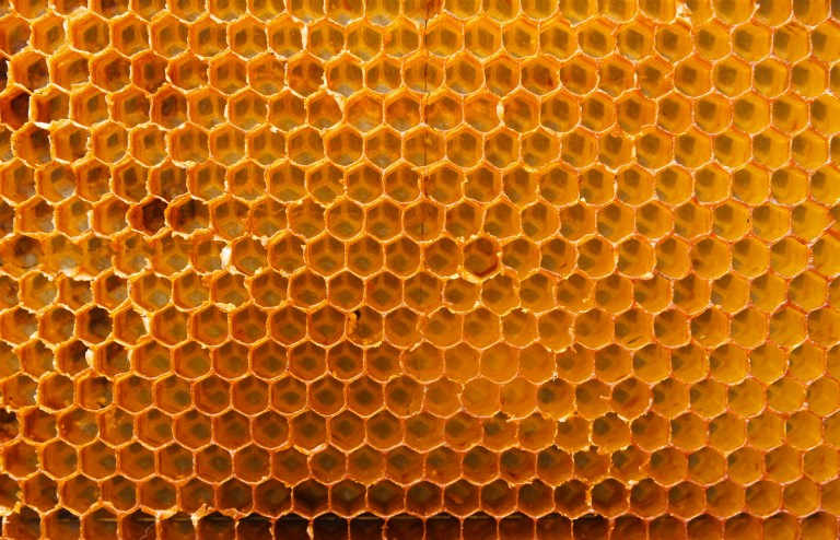 Beeswax Abs