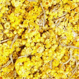 Helychrysum Oil Italy   Precious Oils and Absolutes   Equinox Aromas