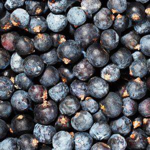 Juniperberry Oil Croatia   Oils and Flavour Chemicals   Equinox Aromas