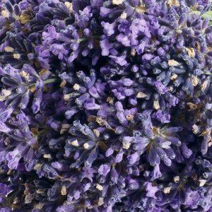 Lavender Oil Croatia | Essential and Aromatherapy Oils | Equinox Aromas