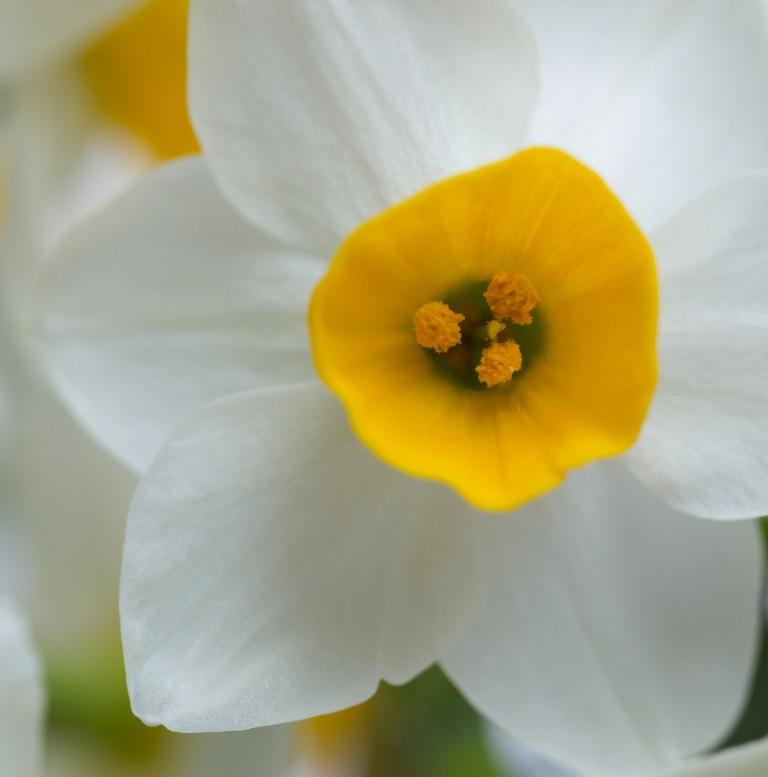 NarcissusAbs