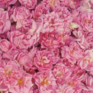 Rose Otto Turkish   Perfumery and Flavour Chemicals   Equinox Aromas