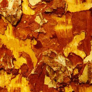 Rosewood Oil | Resinoids and Essential Oils | Equinox Aromas