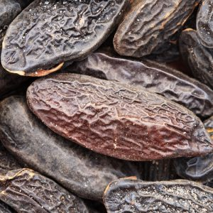 Tonka Absolute | Organic Oil Supplier | Equinox Aromas