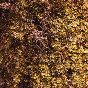 Treemoss Absolute | Essential Oils and Resinoids | Equinox Aromas