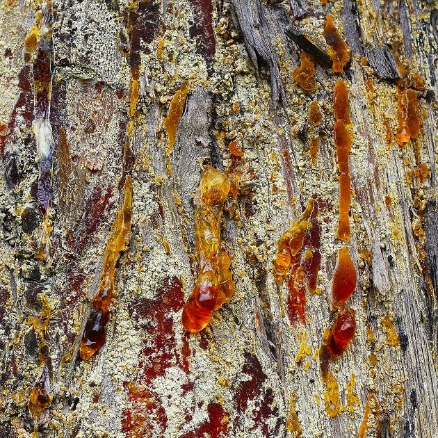 Turpentine Oil USA | Organic Oil Supplier Online | Equinox Aromas
