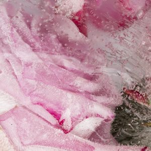 Rose Water | Perfumery and Flavour Chemicals | Equinox Aromas