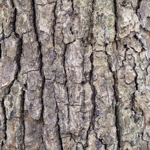 Ho Wood Oil China   Essential and Organic Oils   Equinox Aromas