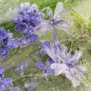 Lavender Water | Organic Oils | Equinox Aromas